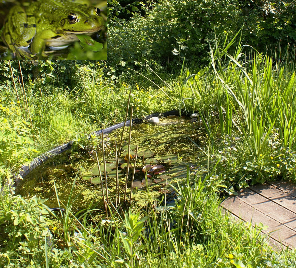 La mare un havre de qui tude dans votre jardin contrat de rivi re dyle gette - Faire une mare dans son jardin ...